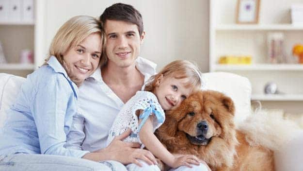 Wills & Trusts dog-young-family Direct Wills Eccles
